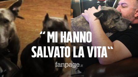 Adotta due Pit Bull dal canile: loro gli salvano la vita durante una rapina