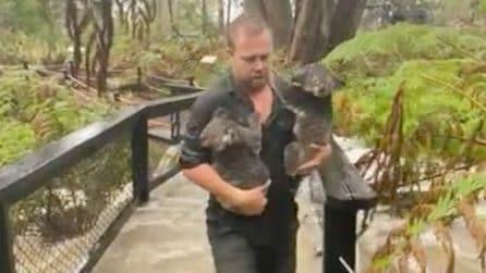 Prima gli incendi ora le alluvioni: per l'Australia non c'è pace