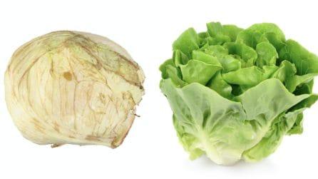 Come lavare la lattuga e mantenerla fresca a lungo