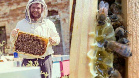 Il miele più dolce d'Italia: Giorgio Poeta, l'apicoltore che cura le api con l'amore