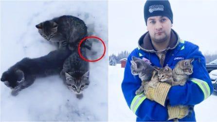 Tre gattini abbandonati sono intrappolati nel ghiaccio, ma un angelo riesce a salvarli con l'ingegno