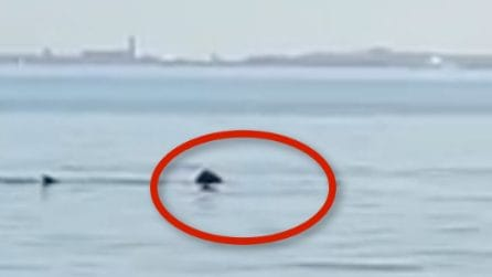 Salento, un gigantesco squalo balena avvistato da pescatori