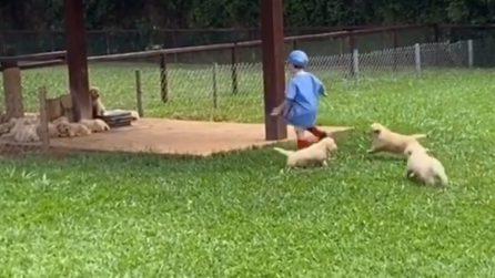 """I cuccioli giocano col bambino: una divertente """"acchiapparella"""""""