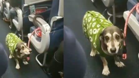 Il cane sale per la prima volta nell'aereo: i suoi occhi durante il volo dicono tutto