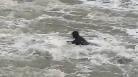 Tempesta Ciara, un surfista in difficoltà travolto dalle onde e portato a largo