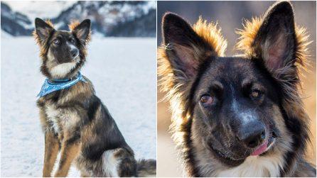 Sfigurato con un morso quando era un cucciolo: la storia di Brodie, il cane salvato dall'amore