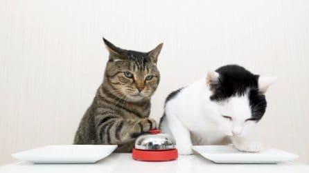 I due gatti che suonano il campanello per chiedere cibo al padrone