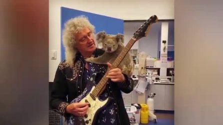 Brian May si riscalda prima del concerto: suona la chitarra con un koala in spalla