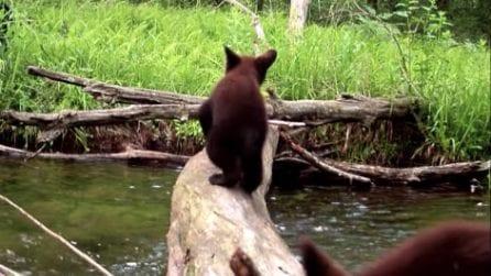 Un tronco e un ruscello: la telecamera riprende la spettacolare vita del bosco