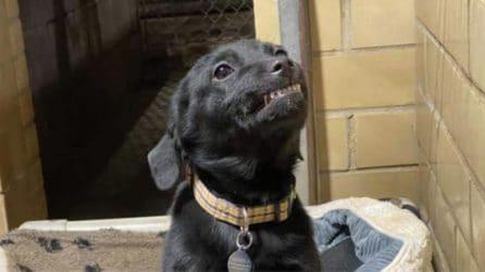Il cucciolo sorridente: cerca una casa e sorride a tutti quelli che lo vanno a trovare