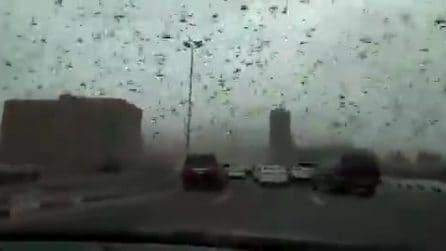 Milioni di insetti invadono la strada: il cielo viene coperto, la scena è pazzesca