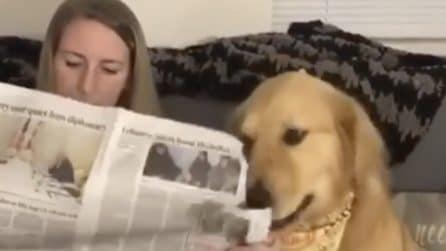 """La padrona è distratta e legge il giornale: il cane si """"vendica"""" perché vuole attenzioni"""