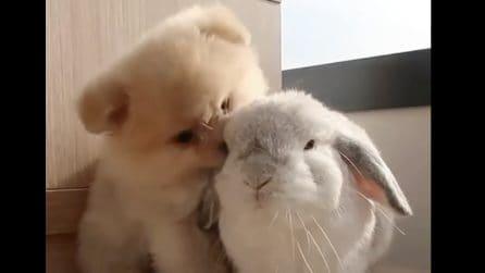 Cagnolino e coniglietto fanno amicizia: la scena è tenerissima