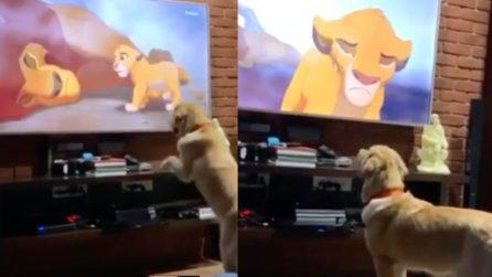 Il cane guarda il Re Leone: la sua reazione commovente quando vede una delle scene simbolo