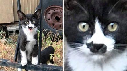 Il gatto diventato una star del web: c'è un gatto disegnato sulla punta del naso
