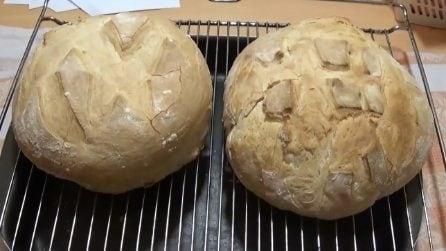 Pane fatto in casa: semplice, veloce e gustoso