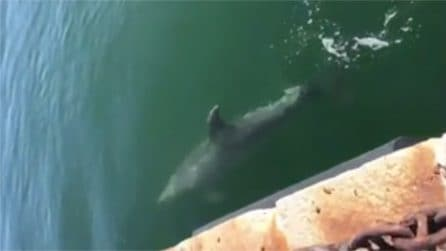Effetto Coronavirus, al porto di Cagliari compaiono i delfini: arriva fin sotto la banchina