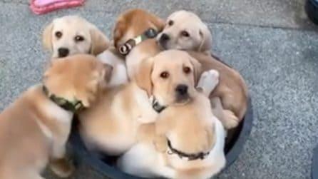 Uno per tutti, tutti per uno: cercano di entrare tutti in una sola ciotola
