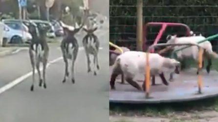Strade vuote in Italia, gli animali passeggiano e popolano i luoghi deserti