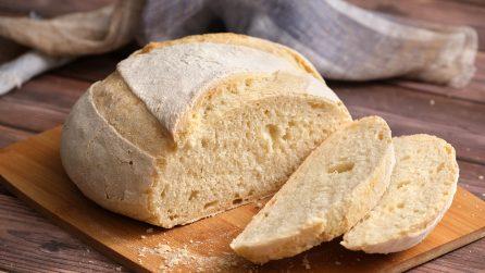 Pane di Altamura: come farlo in casa alto, morbido e gustoso!