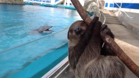 Si incontrano per la prima volta: la felicità del delfino