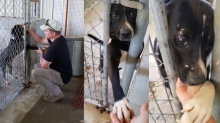 Il cagnolino prova con tutte le forze il contatto con l'uomo: così trova una nuova famiglia