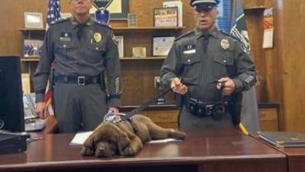 Il cagnolino entra in polizia: ma dorme durante la sua cerimonia di giuramento