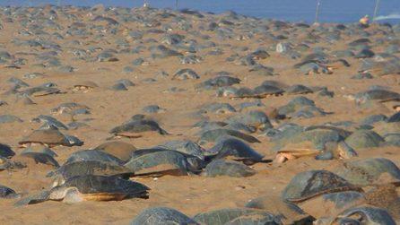 Non ci sono più umani in spiaggia: le tartarughe tornano a deporre le uova