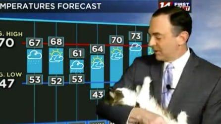 Il meteorologo fa le previsioni da casa: ma la vera star è il suo gatto