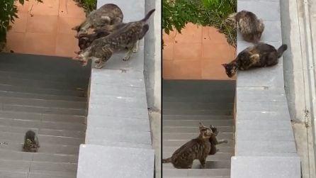 Il cucciolo è caduto sulle scale e non riesce a saltare, i suoi amici lo salvano