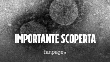Scoperto nuovo anticorpo monoclonale per sconfiggere il Coronavirus: speranze per la cura