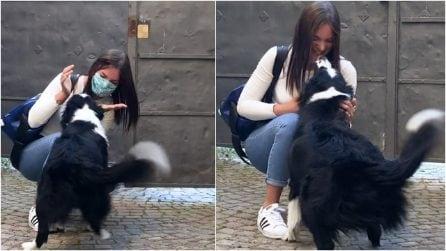 Separate dal lockdown, dopo 2 mesi la cagnolina rivede la sua padrona e piange dalla gioia