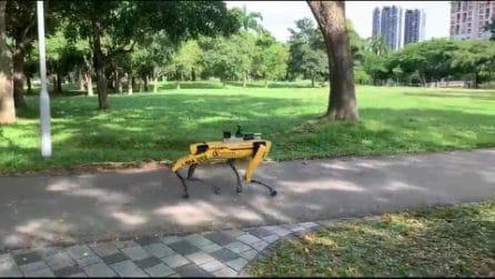 Un cane robot gira per il parco e fa rispettare il distanziamento sociale