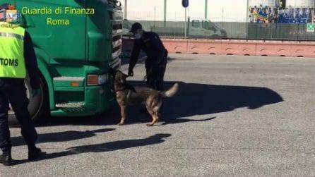 Civitacchia, Guardia di Finanza sequestra 143 chili di droga al porto nascosti in un autoarticolato