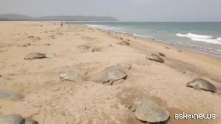 La prima corsa verso il mare delle baby tartarughe appena nate