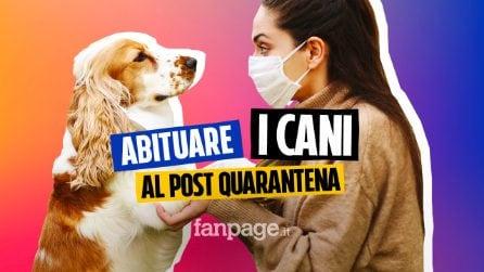 I 5 consigli pratici per far abituare i nostri cani al dopo quarantena
