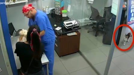 Il cagnolino è spaventato dall'iniezione, arriva un gatto per salvarlo
