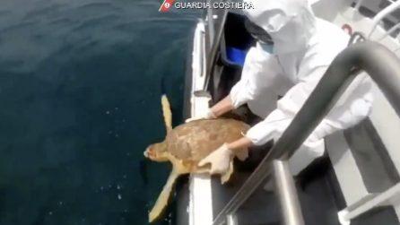 Pescara, il momento del rilascio in libertà delle tartarughe liberate dalle reti da pesca