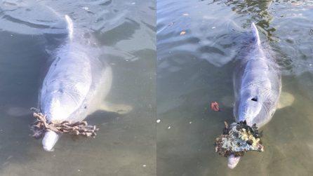 Il delfino capisce cos'è che piace all'uomo e lo fa in continuazione
