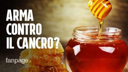 Cancro al colon, miele di corbezzolo possibile alleato contro le cellule tumorali: le uccide