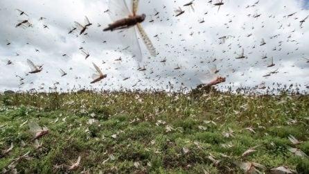 India, milioni di locuste in città: l'invasione impressionante