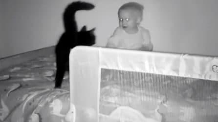Gatto impaurito dal bambino salta sul suo letto: la telecamera svela un dolcissimo segreto