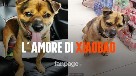 Wuhan, la storia del cane Xiaobao: da tre mesi aspetta il suo padrone morto di Coronavirus