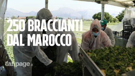 """Abruzzo, l'agricoltura riparte con gli stagionali dal Marocco: """"Senza di loro non sapevamo come fare"""""""
