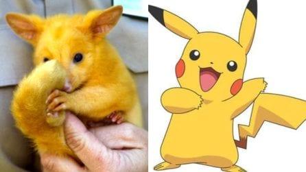 Pikachu esiste davvero, era in fin di vita ed è stato salvato da alcuni veterinari