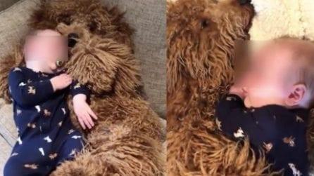 Il piccolo si addormenta tra le zampe del suo migliore amico