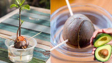 Come coltivare l'avocado: tre metodi per farlo in casa