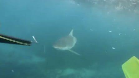 Faccia a faccia con lo squalo: la ragazza urla impaurita temendo un attacco