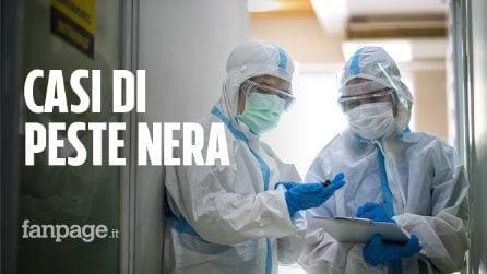 Due casi di peste nera in Mongolia, scatta la quarantena per la regione di Khovd