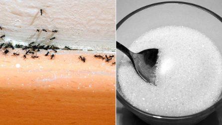 Come tenere lontane le formiche dalle piante